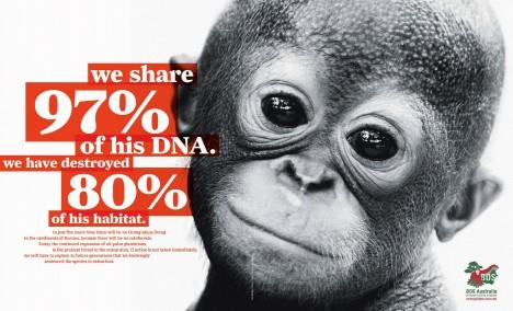the species to extinct...